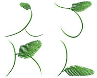 Fern words. Collection of fern words.clipping path included Royalty Free Stock Image
