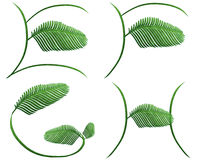 Fern words. Collection of fern words.clipping path included Royalty Free Stock Photography