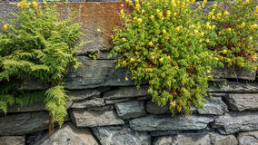 The fern and yelloy flowers on the stone wall. The fern and yelloy small flowers on the stone wall Royalty Free Stock Photography