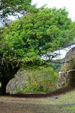 Fernando de Noronha. Ancient fort in Fernando de Noronha Stock Photos