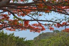 Fernando de Noronha. Tree branch overlooking the beach from the port of Fernando de Noronha Royalty Free Stock Photos