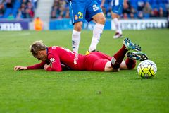 Fernando Torres-spelen bij de gelijke van La Liga tussen RCD Espanyol en Atletico DE Madrid Royalty-vrije Stock Foto's