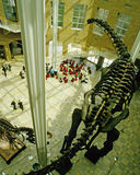 Fernbank Natural History Museum lobby Royalty Free Stock Photography