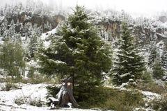 Ferner Garten en parc naturel de Kaunergrat près de vallée de Kaunertal au Tyrol, Autriche Photo libre de droits