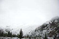 Ferner Garten en parc naturel de Kaunergrat près de vallée de Kaunertal au Tyrol, Autriche Images stock