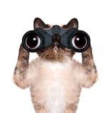 Fernglaskatze, die sorgfältig sucht, schaut und beobachtet lizenzfreie stockfotos