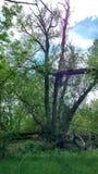 Ferngully-Baum Lizenzfreie Stockfotos