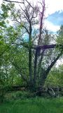 Ferngully träd Royaltyfria Foton