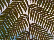 Fernleaf background. A fernleaf against a lightly clouded sky Stock Images