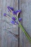 Fernleaf lavendlar Fotografering för Bildbyråer