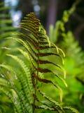 ferns Foto de archivo libre de regalías