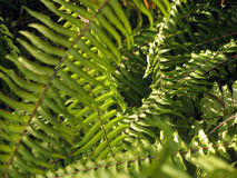 Ferns fotos de stock