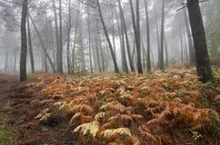 Ferns Arkivfoton