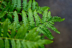 Ferns. Stock Photo