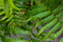 Ferns. Stock Images