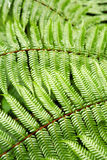 Ferns Stock Photography