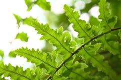 Ferns against the light Stock Photo