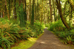Ferns along a coastal forest trail Stock Image
