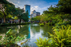 Ferns along a pond at 2/28 Peace Park, in Taipei, Taiwan. Royalty Free Stock Photos