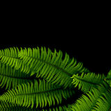 Ferns background royalty free stock images