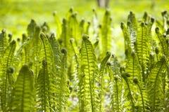 Ferns background royalty free stock photos