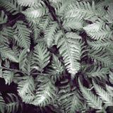 Ferns Royalty Free Stock Photos