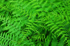 Ferns in butchart gardens Stock Images
