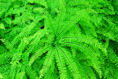 Ferns in butchart gardens Stock Photos