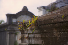 Ferns in the Cemetery Stock Photos
