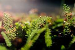 Ferns. Closeup of a dark green fern Royalty Free Stock Photo