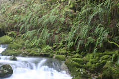 Ferns conservation in river Stock Photo