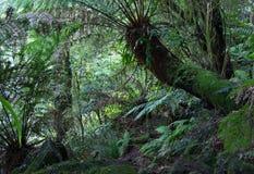 Ferns da floresta húmida imagem de stock