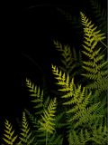 Ferns on dark background Stock Photos