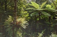 Ferns de Caledona novo Imagem de Stock Royalty Free