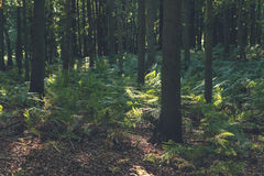 Ferns in deciduous forest. Stock Images