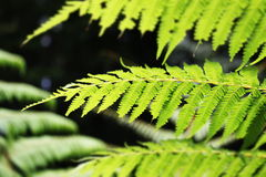 Ferns. A different perspective of ferns Stock Image