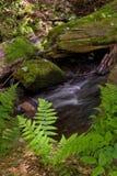 Ferns e musgo imagem de stock royalty free