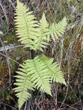 Ferns. In the forest growing wild on the earth royalty free stock photography