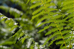 Ferns Stock Photos
