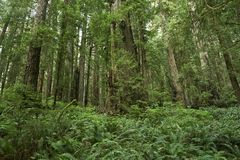 Ferns Forest Stock Images