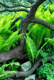 Ferns in forest Stock Images