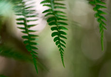 Ferns in the forest Royalty Free Stock Photos