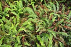 Ferns in the forest Stock Photography