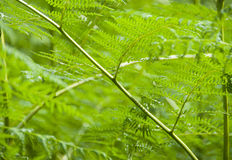 Ferns in the forest south africa Royalty Free Stock Photos