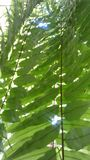 Tropical green ferns in the garden Stock Photography