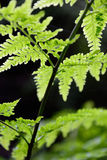 Ferns in the Garden Route Stock Image