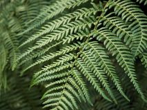 Close up fern leaves in soft light with blurred background stock photos