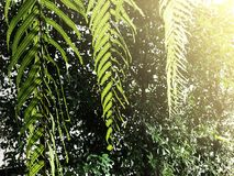 Ferns on Green Background. Beautiful of  natural. Fresh and relaxing Stock Image