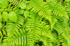 Ferns and ground cover. Stock Photos