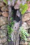 Ferns grow on rock Royalty Free Stock Photos